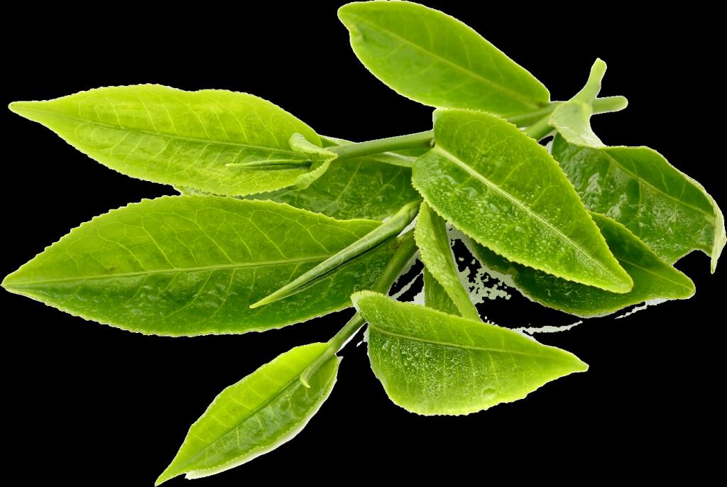 Extracto te verde