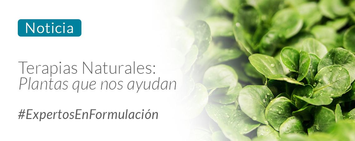 Terapias naturales: Plantas que nos ayudan a sentirnos bien.